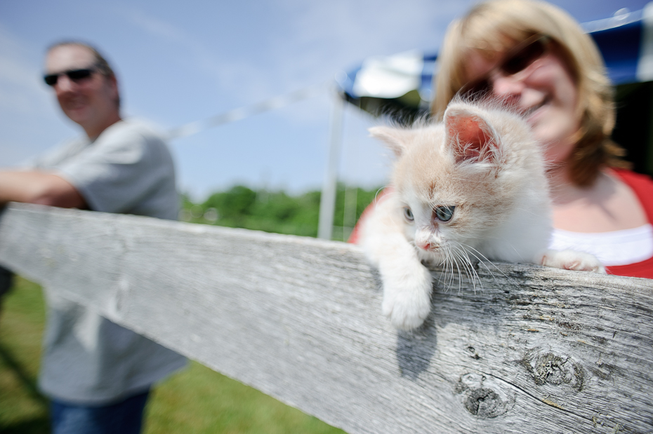 Carma Cat Rescue Saint John