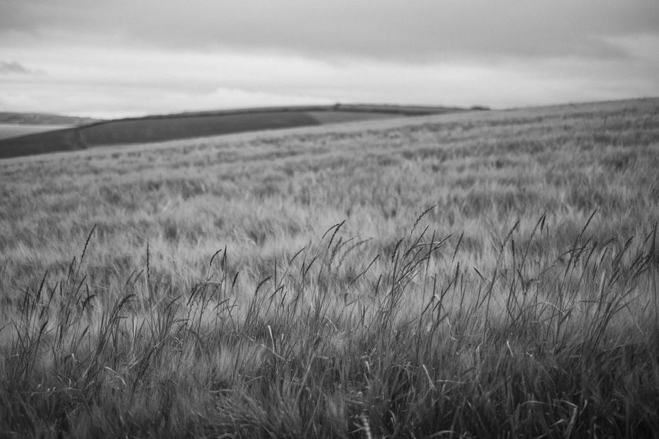 Ireland Fields